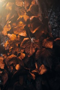 brown,nature,Leaves,Autumn,4K